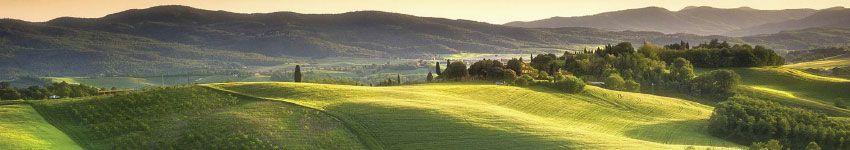 Torrefazioni di Caffè in Toscana Cialde e Capsule
