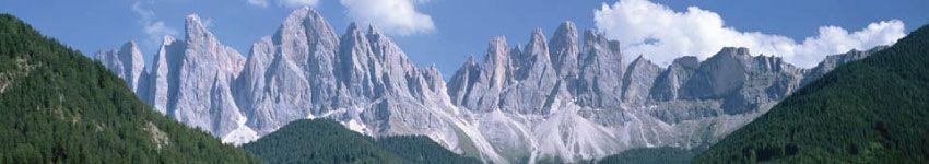 Torrefazioni di Caffè in Trentino Alto Adige Cialde e Capsule